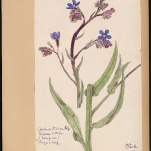 Poucel-Flore-Vol-02_Planches.pdf