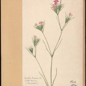 Poucel-Flore-Vol-03_Planches.pdf