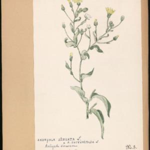 Poucel-Flore-Vol-04_Planches.pdf