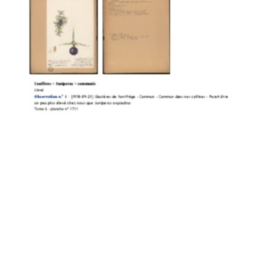 Poucel-Flore-Vol-06_Observations.pdf