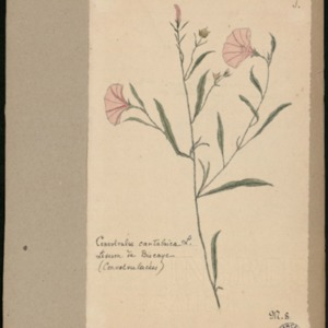 Poucel-Flore-Vol-06_Planches.pdf