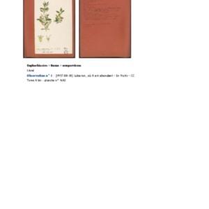 Poucel-Flore-Vol-08bis_Observations.pdf