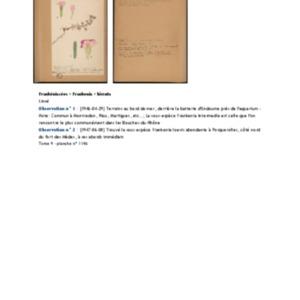 Poucel-Flore-Vol-09_Observations.pdf