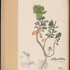 Poucel-Flore-Vol-09_Planches.pdf