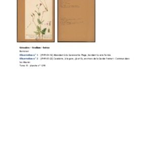 Poucel-Flore-Vol-10_Observations.pdf