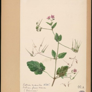 Poucel-Flore-Vol-10_Planches.pdf
