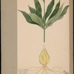 Poucel-Flore-Vol-12_Planches.pdf