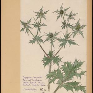 Poucel-Flore-Vol-14_Planches.pdf