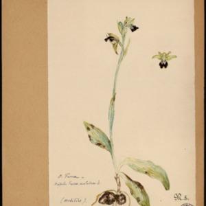 Poucel-Flore-Vol-15_Planches.pdf