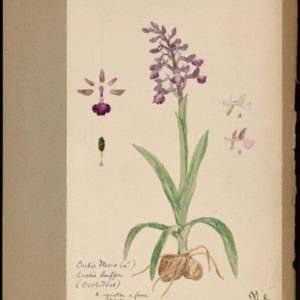 Poucel-Flore-Vol-16_Planches.pdf