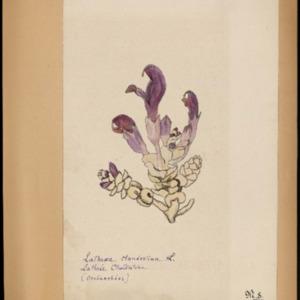 Poucel-Flore-Vol-16bis_Planches.pdf