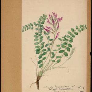 Poucel-Flore-Vol-17_Planches.pdf