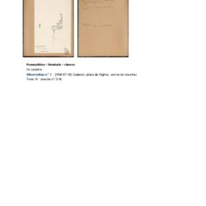 Poucel-Flore-Vol-18_Observations.pdf