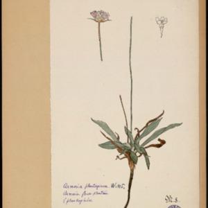 Poucel-Flore-Vol-18_Planches.pdf