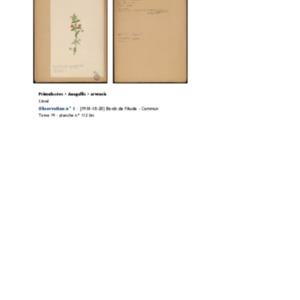 Poucel-Flore-Vol-19_Observations.pdf