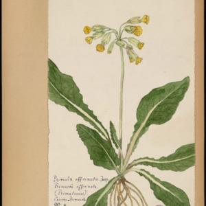Poucel-Flore-Vol-19_Planches.pdf