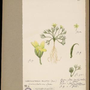 Poucel-Flore-Vol-20_Planches.pdf
