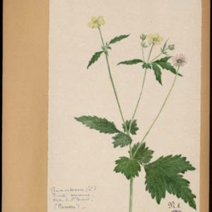 Poucel-Flore-Vol-21_Planches.pdf