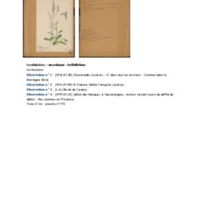 Poucel-Flore-Vol-21bis_Observations.pdf