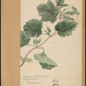 Poucel-Flore-Vol-21bis_Planches.pdf