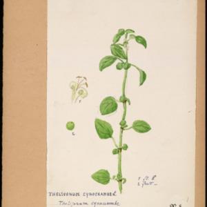 Poucel-Flore-Vol-22_Planches.pdf