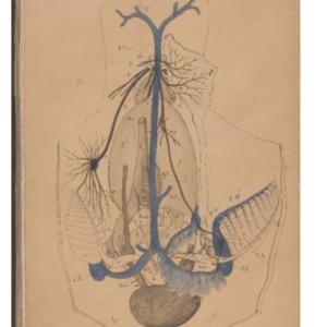 BUSC-MS-03-8_Vayssiere_Mollusques-planches-noir-rouge-bleu.pdf